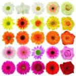 Значение количества цветов