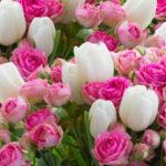 Цветы оптом на Рижском рынке