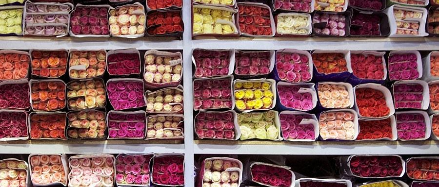 Тюльпаны на Рижском рынке