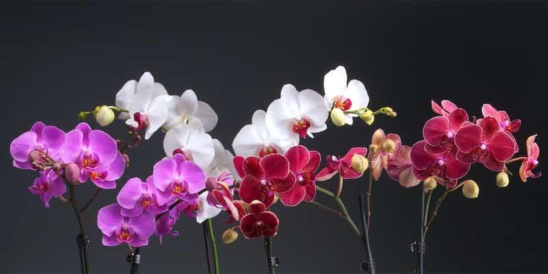 Орхидеи на Рижском рынке