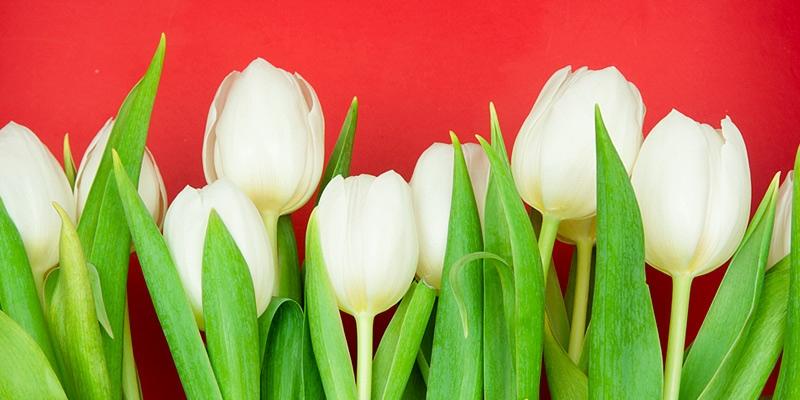 Значение белых цветов