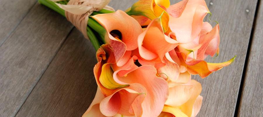 Каллы-значение цветка