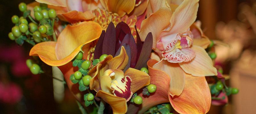Значение орхидей